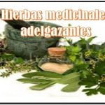 hierbas medicinales para adelgazar