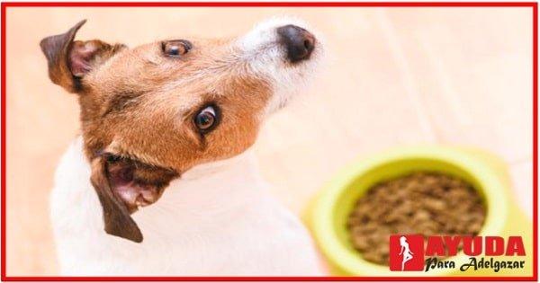 Dieta casera para bajar de peso a mi perro