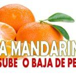 La mandarina sube o baja de peso